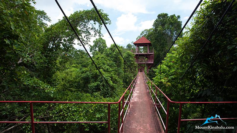 LAHAD DATU / BORNEO RAINFOREST LODGE / NATURE TRAILS / TREE-TOP CANOPY WALK / NIGHT DRIVE & Danum Valley Rainforest Beauty Experience   Mount Kinabalu   Mount ...